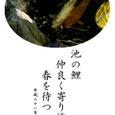 春を待つ鯉