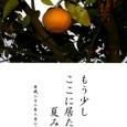 果樹の一生